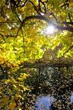 秋叶和星期日 免版税库存图片