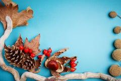 秋叶和杉木锥体在蓝色背景 秋天背景复制空间 库存图片