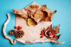 秋叶和杉木锥体在蓝色背景 秋天背景特写镜头上色常春藤叶子橙红 免版税库存图片