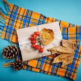 秋叶和杉木锥体在蓝色背景 秋天背景特写镜头上色常春藤叶子橙红 免版税库存照片