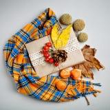 秋叶和杉木锥体在轻的背景 秋天背景特写镜头上色常春藤叶子橙红 免版税库存图片