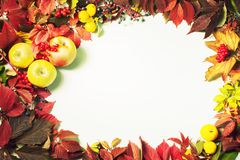 秋叶和果子,顶视图, Copyspace,背景,框架的秋天安排 免版税图库摄影