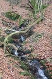 秋叶和森林地小河 免版税库存照片