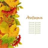 秋叶和浆果 免版税库存图片