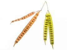 秋叶和爱标志绿色和黄色 免版税库存照片