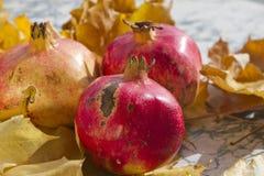 秋叶和石榴 在静物画的成熟有机石榴与黄色叶子 季节性背景纹理 秋天foliag 免版税库存照片
