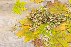 秋叶和种子在木背景 免版税库存图片