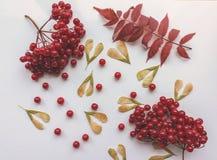 秋叶和红色莓果在白色背景 免版税库存照片