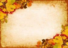 秋叶和红色莓果在葡萄酒纸 图库摄影