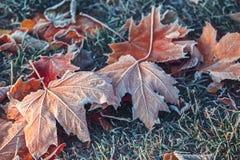 秋叶和草与树冰 免版税库存图片