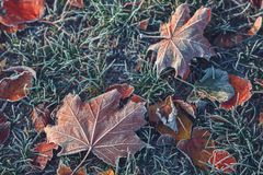 秋叶和草与树冰 库存图片
