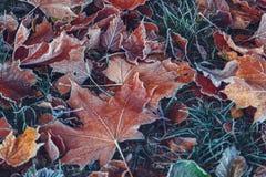 秋叶和草与树冰 库存照片