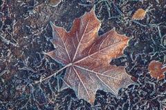 秋叶和草与树冰 免版税库存照片