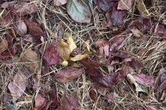 秋叶和草在森林地板上 免版税图库摄影
