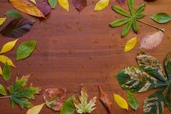 秋叶和雨下落 免版税库存图片