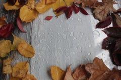 秋叶和雨珠在灰色 免版税库存照片