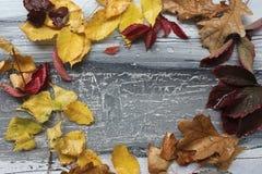 秋叶和雨珠在灰色 库存照片