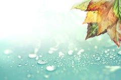 秋叶和雨水下落背景 免版税库存照片