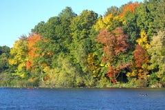 秋叶和鹅在磨房筑成池塘,康涅狄格 免版税库存照片