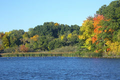 秋叶和鹅在磨房筑成池塘,康涅狄格 库存照片