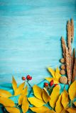秋叶和dogrose在木背景与拷贝空间 秋天背景特写镜头上色常春藤叶子橙红 免版税图库摄影