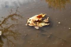 秋叶在一个泥泞的池塘 免版税库存图片