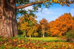 秋叶在一棵大树下 免版税库存图片