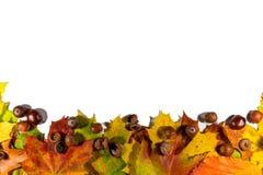 秋叶在与空的空间的白色背景设置了,隔绝文本的 库存照片