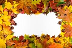 秋叶在与空的空间的白色背景设置了,隔绝文本的 免版税图库摄影
