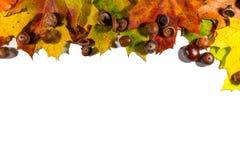 秋叶在与空的空间的白色背景设置了,隔绝文本的 免版税库存图片
