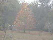 秋叶在乔治亚 免版税库存照片