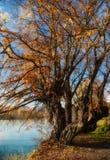 秋叶在伊夫雷亚 库存照片