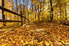 秋叶在凯撒小河国家公园,俄亥俄 免版税库存图片