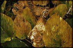 秋叶在庭院里 免版税图库摄影