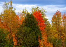 秋叶在新不伦瑞克,加拿大 免版税库存图片