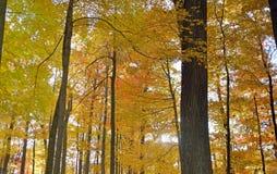 秋叶在木桶匠的岩石森林西维吉尼亚里 库存图片