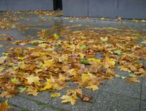 秋叶在柏林市中心 图库摄影