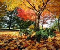 秋叶在树和在地面上 图库摄影