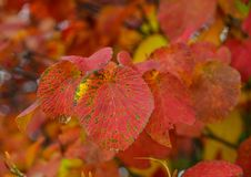 秋叶在森林里 图库摄影