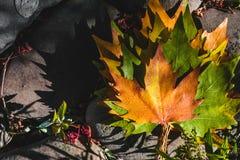 秋叶在森林里 库存照片