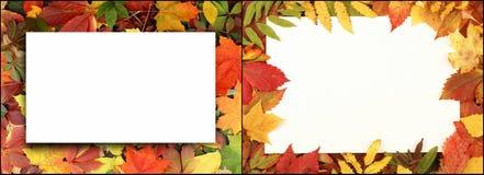 秋叶在森林里 免版税库存图片