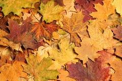 秋叶在森林里 库存图片