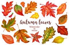 秋叶在白色背景的水彩 也corel凹道例证向量 图库摄影
