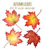 秋叶在白色背景的水彩 免版税库存照片