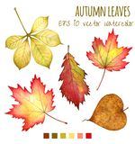 秋叶在白色背景的水彩 免版税库存图片