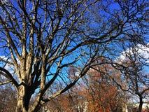 秋叶在秋天期间的一个公园 免版税图库摄影