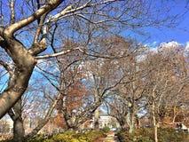 秋叶在秋天期间的一个公园 图库摄影