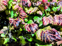 秋叶在秋天期间的一个公园 免版税库存图片