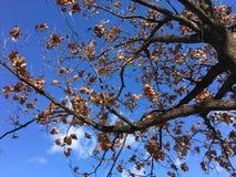 秋叶在秋天期间的一个公园 免版税库存照片