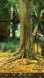 秋叶在秋天树下-秋天风景 免版税库存照片